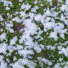 Sneeuwmachine sneeuw huren - Partytentverhuur Gorinchem
